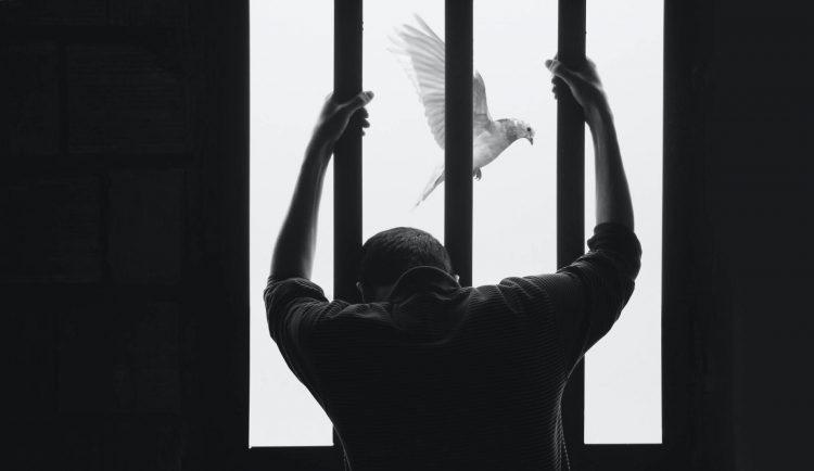 Personne derrière des barreaux devant un oiseau
